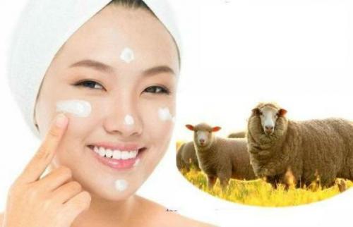 Ai Nên Dùng Ủ Kích Trắng Nhau Thai Cừu