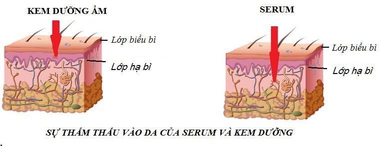 serum 79